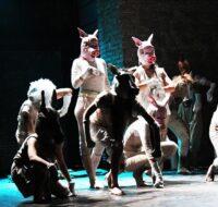 The Farm - Accademia Teatrale Di Roma Sofia Amendolea